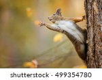 cute red squirrel on the tree... | Shutterstock . vector #499354780