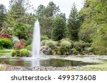 Green Lily Pads With Blooms In...