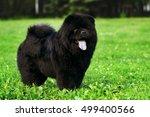 fluffy dog breeds chow chow... | Shutterstock . vector #499400566