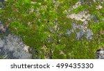 Beautiful Moss And Lichen...