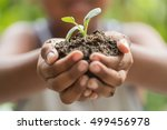 child holding young seedling...   Shutterstock . vector #499456978