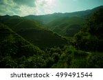 mountain landscape of...   Shutterstock . vector #499491544