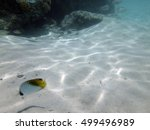 fish and sea life around the... | Shutterstock . vector #499496989