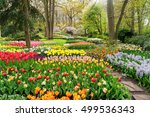 Colourful Tulips Flowerbeds An...