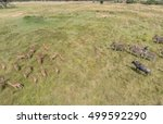 aerial view of animals on... | Shutterstock . vector #499592290