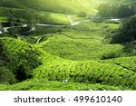 sunlight tea plantation | Shutterstock . vector #499610140
