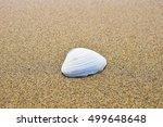 shell  | Shutterstock . vector #499648648