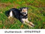 dog | Shutterstock . vector #499699969