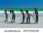 Group Of King Penguins  Going...