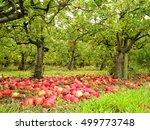 English Autumn Organic Orchard...