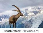 ibex   range of mont blanc. in... | Shutterstock . vector #499828474