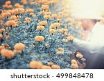 Small photo of Yellow Flower.Marigolds (Tagetes erecta, Mexican marigold, African marigold) in the garden with workers.Color toned.