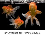 3 Fantail Goldfishs Movement ...