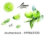 lime and mint watercolor... | Shutterstock . vector #499865530