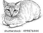 serious house cat   Shutterstock .eps vector #499876444