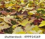 vibrant maple leaves on the... | Shutterstock . vector #499914169
