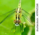 Macro Photo Of Dragonfly On...