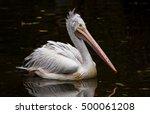 Spot Billed Pelican  Grey...