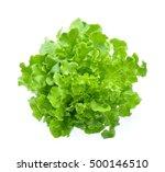 green oak lettuce isolated on... | Shutterstock . vector #500146510