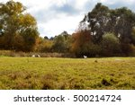 Sun Meadow In Autumn. Four...
