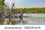 White Western Reef Heron ...