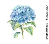 Hydrangea  Watercolor...