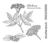 Ink Elderberry Herbal...