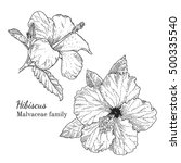 ink hibiscus herbal... | Shutterstock .eps vector #500335540