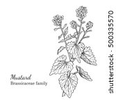 ink mustard herbal illustration.... | Shutterstock .eps vector #500335570