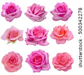 Stock photo collage of pink roses isolated on white background 500342278