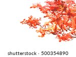 watercolor tree isolated on... | Shutterstock . vector #500354890