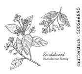 ink sandalwood herbal... | Shutterstock .eps vector #500366890