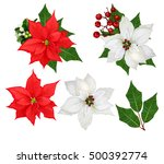 Set. Flowers Poinsettia White...