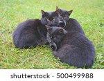 Three Black Cats On The Green...