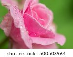 close up macro photograph of a... | Shutterstock . vector #500508964