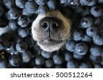 dog s nose poking out of black... | Shutterstock . vector #500512264