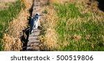 ardea cinerea. | Shutterstock . vector #500519806