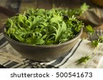 raw green organic baby kale in... | Shutterstock . vector #500541673