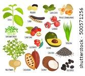 vegetarian superfood healthy...   Shutterstock .eps vector #500571256