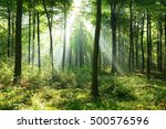 morning in the forest | Shutterstock . vector #500576596