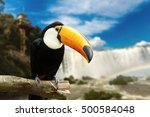toucan bird on the nature | Shutterstock . vector #500584048
