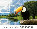 toucan bird in the nature | Shutterstock . vector #500584054