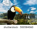 toucan bird on the nature | Shutterstock . vector #500584060