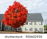 red autumn tree and apartment... | Shutterstock . vector #500602930