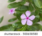 soft focus of pink flower and... | Shutterstock . vector #500658580