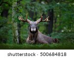 moose  north america  or... | Shutterstock . vector #500684818