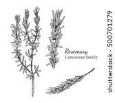 ink rosemary herbal... | Shutterstock .eps vector #500701279