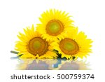 Three Sunflowers. Isolated On...