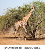 blur in south africa   kruger ... | Shutterstock . vector #500804068