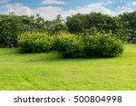 green lawn with blue sky in park | Shutterstock . vector #500804998